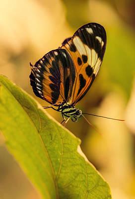 Orange And Black Butterfly On The Green Leaf Print by Jaroslaw Blaminsky