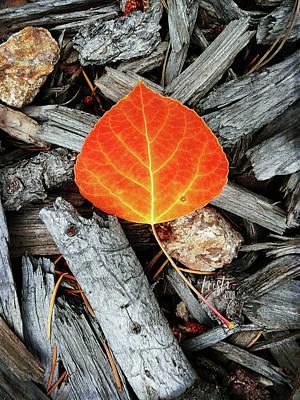 Orange Aspen Leaf Print by Krista-