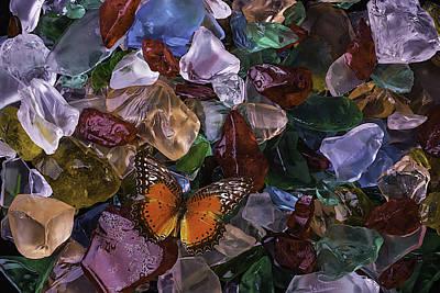 Orange Butterfly On Sea Glass Print by Garry Gay