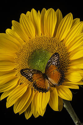 Sunflowers Photograph - Orange Butterfly On Sunflower by Garry Gay