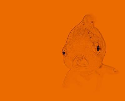 Schizzo Photograph - Orange Fish by  Judy Bernier