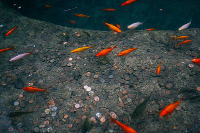 Orange Fish Pond Print by Pati Photography