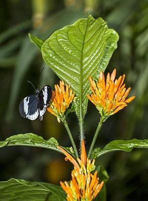 Orange Flowers With Butterfly Print by Bob Slitzan