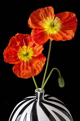 Vase Photograph - Orange Iceland Poppies by Garry Gay