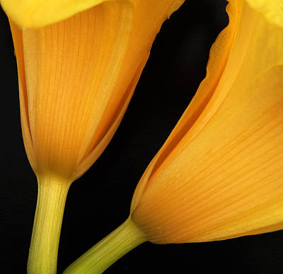 Orange Lily Abstract Print by Tony Ramos