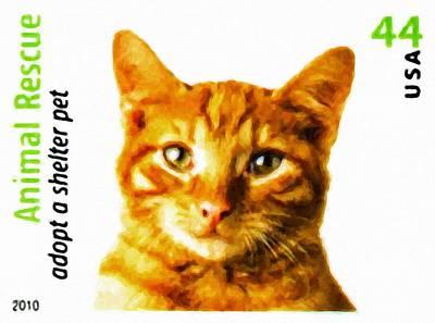 Orange Tabby Cat Print by Lanjee Chee