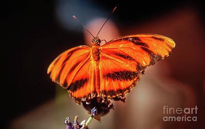 Orange Tiger Butterfly Print by Robert Bales