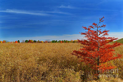 Indiana Photograph - Orange Tree In Fall Field by Amy Lucid