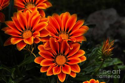 Barbie Photograph - Orange You Glad II by Al Bourassa