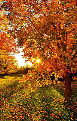 Heaven Photograph - Orange You Glad by Phil Koch