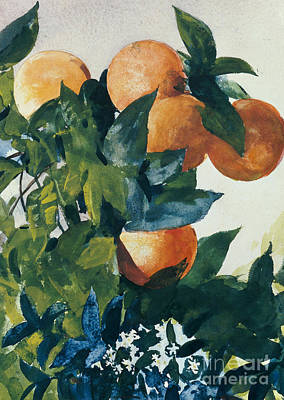 Fruit Tree Painting - Oranges On A Branch by Winslow Homer