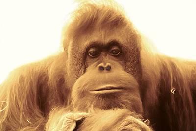 Ape Mixed Media - Orangutan by Dan Sproul