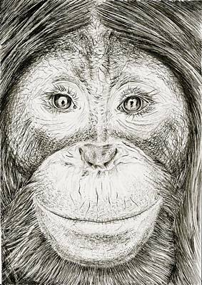 Orangutan Drawing - Orangutan by Kate Evans