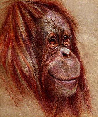 Ape Mixed Media - Orangutan Smiling - Sketch  by Svetlana Ledneva-Schukina