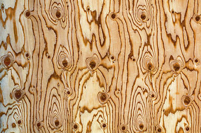 Ply Wood Photograph - Orbicular Pattern  by Bijan Pirnia