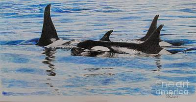 Orca Drawing - Orcas Playground by David Cleland
