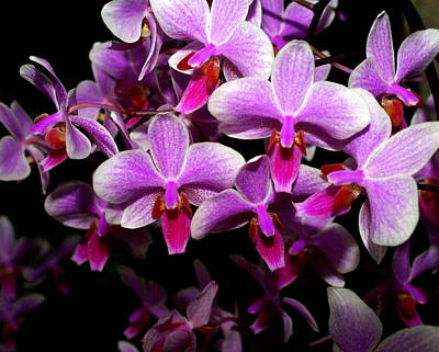 Orchid 12 Print by Marty Koch