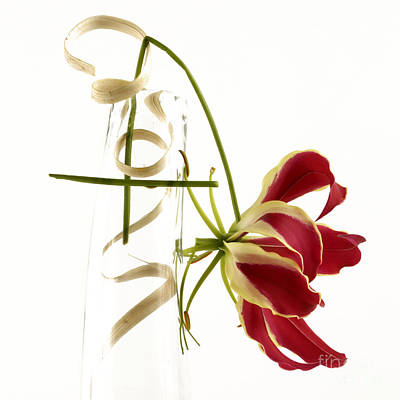 Cut Out Photograph - Orchid by Bernard Jaubert