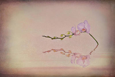 Orchid Blooms And Buds Print by Tom Mc Nemar