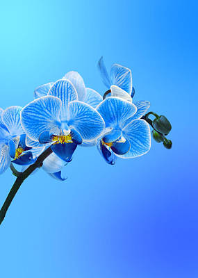 Orchid Photograph - Orchid Blue by Mark Rogan