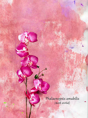 Pink Photograph - Orchid by Mark Rogan