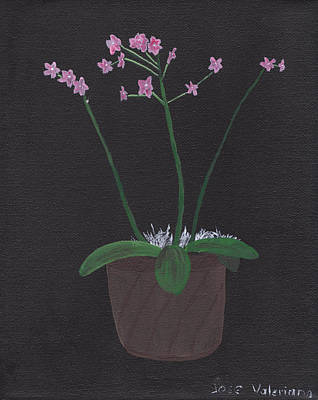 Floral Drawing - Orchid-phalaeropsis Hybrid by M Valeriano