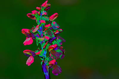 Manipulation Photograph - Orchid by Richard Patmore