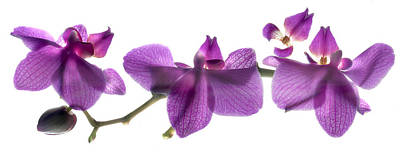 Orchids Digital Art - Orchid Row by Julia McLemore