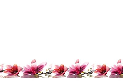 Digital Art - Orchids... by Jacqueline Schreiber