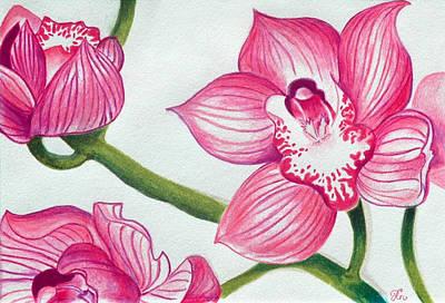 Orchids Drawing - Orchids by Ramneek Narang
