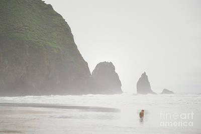 Oregon Cannon Beach Dog Landscape Print by Andrea Hazel Ihlefeld