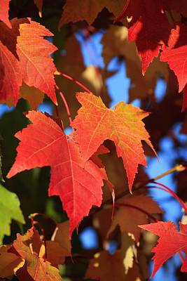 Photograph - Oregon, United States Of America Leaves by Craig Tuttle