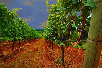 Vineyard Digital Art - Oregon Vineyard by Jeff Burgess