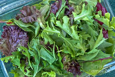 Lettuce Photograph - Organic Baby Lettuce Salad Mix by Inga Spence