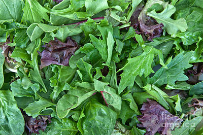 Lettuce Photograph - Organic Baby Lettuce Spring Mix by Inga Spence