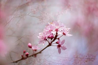Oriental Blossom Print by Jacky Parker