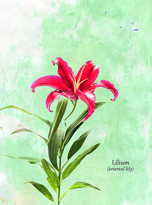Lily Photograph - Oriental Lily by Mark Rogan