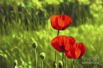 Organic Painting - Oriental Poppies by Veikko Suikkanen