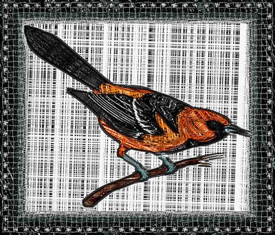 Oriole Mixed Media - Oriole On A Branch by Mario Carini