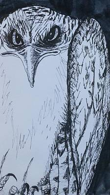 Osprey Drawing - Osprey by Anna-Maria Sacio