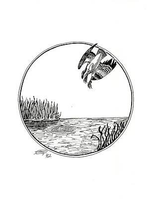 Osprey Drawing - Osprey by Donna Forsyth