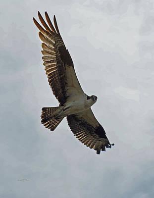 Osprey Photograph - Osprey In Flight by Ernie Echols