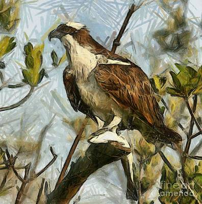Osprey Drawing - Osprey by Murphy Elliott