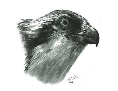 Osprey Drawing - Osprey by Reed Palmer