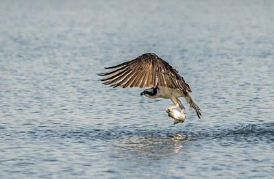 Wild Trout Photograph - Osprey Score by Loree Johnson