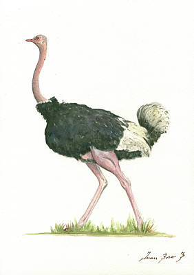Watercolor Bird Painting - Ostrich by Juan Bosco