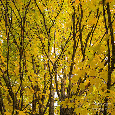 Ohio Photograph - Otter Creek State Park by Twenty Two North Photography