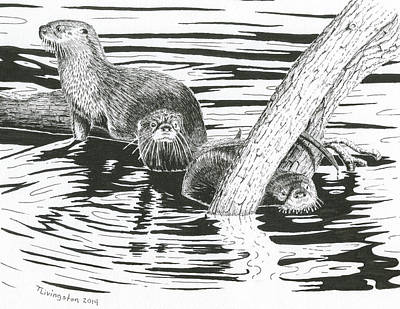 Otter Drawing - Otters Three by Timothy Livingston