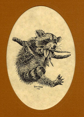 Raccoon Drawing - Out On A Limb by Karen Musick