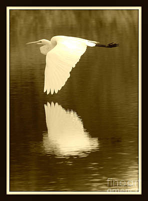 Egret Photograph - Over Golden Pond by Carol Groenen